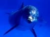 Riserva oceanica: Blue Water