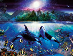 Blue Ocean - Orca