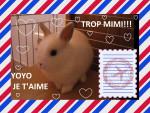 Coniglio nano yoyo2 - Maschio ( (Altro))