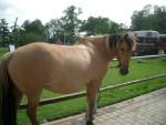 Pony Lady - ( (15 anni))