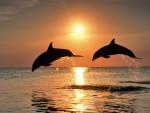 dolph y delia -