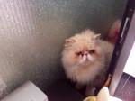 Cute kitty - (5 anni)